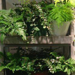 Creating an Indoor Garden!