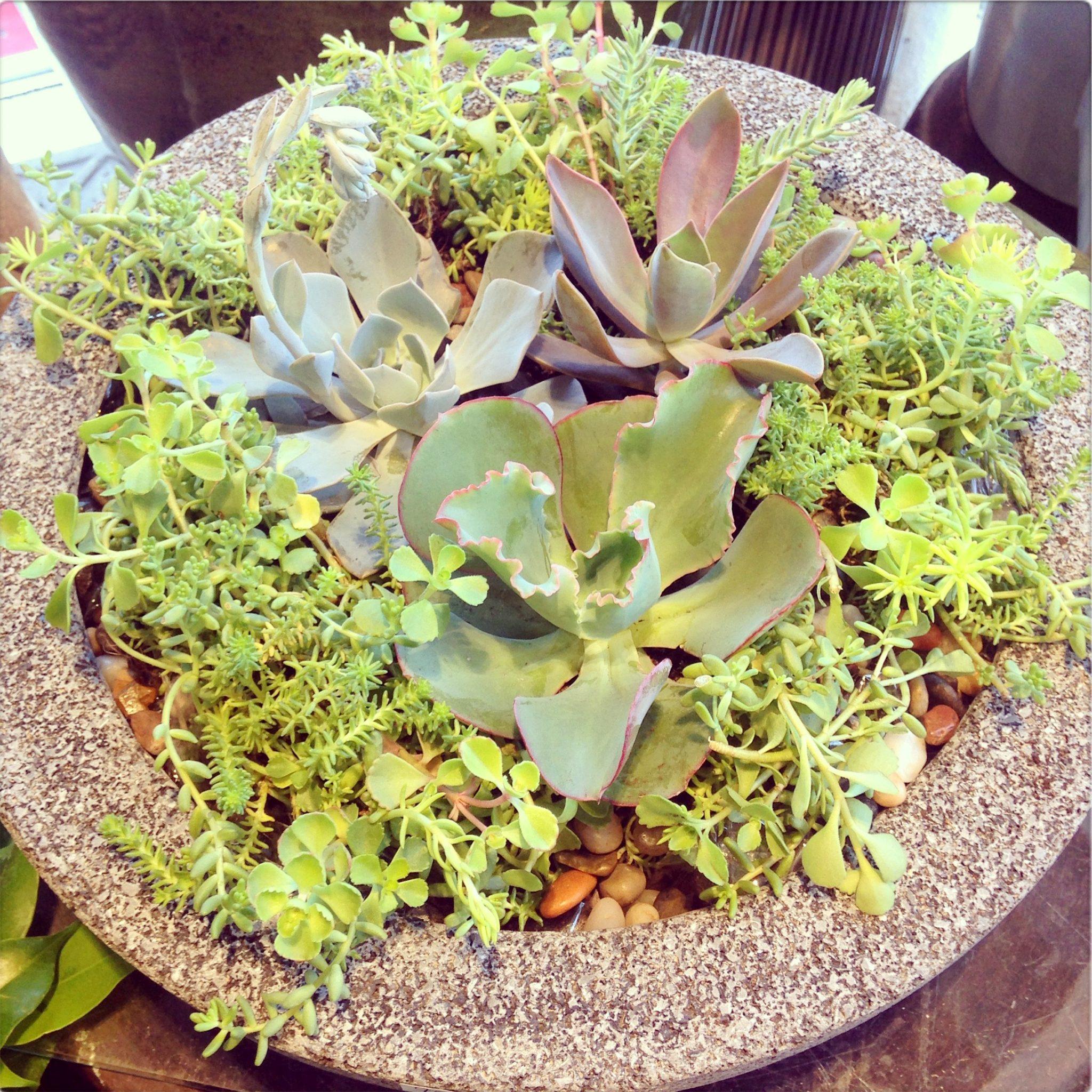 Terrarium of succulents
