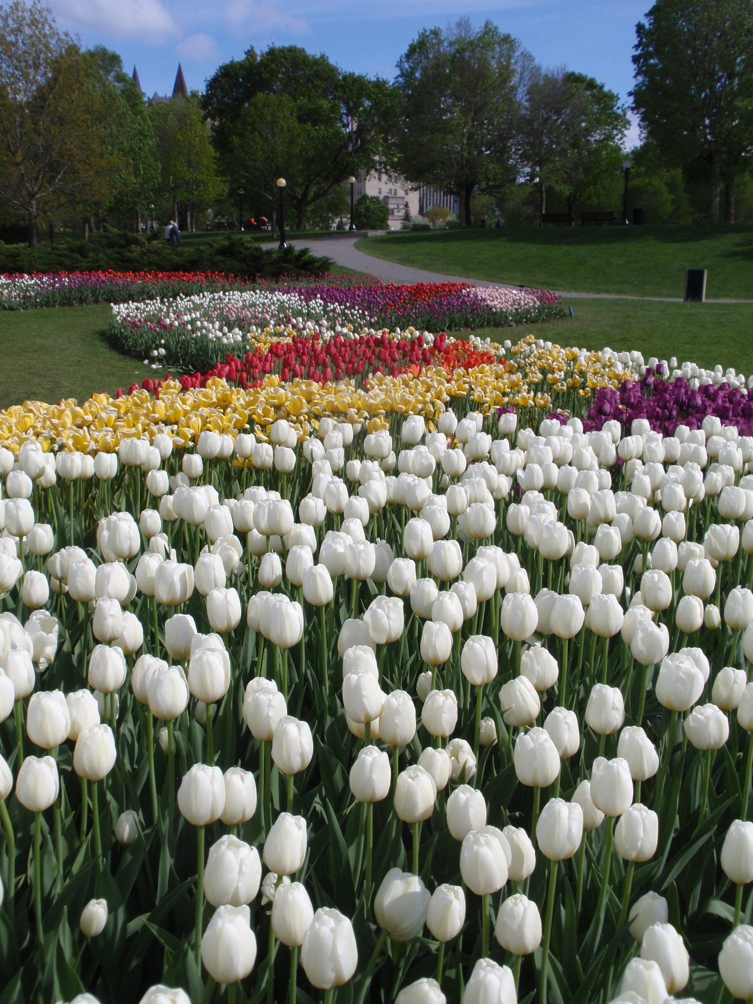 Fall Bulb Planting! It's never too early to think of spring!