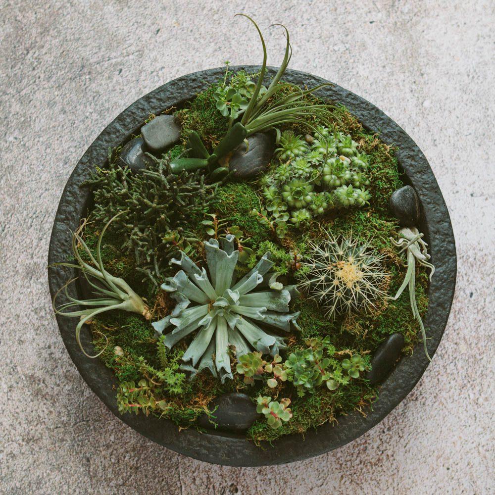 A low-maintenance succulent planter.