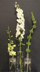 Line flowers dendrobium, delphinium and bells of Ireland.