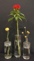 Accent flowers ranunculus, celosia and craspedia