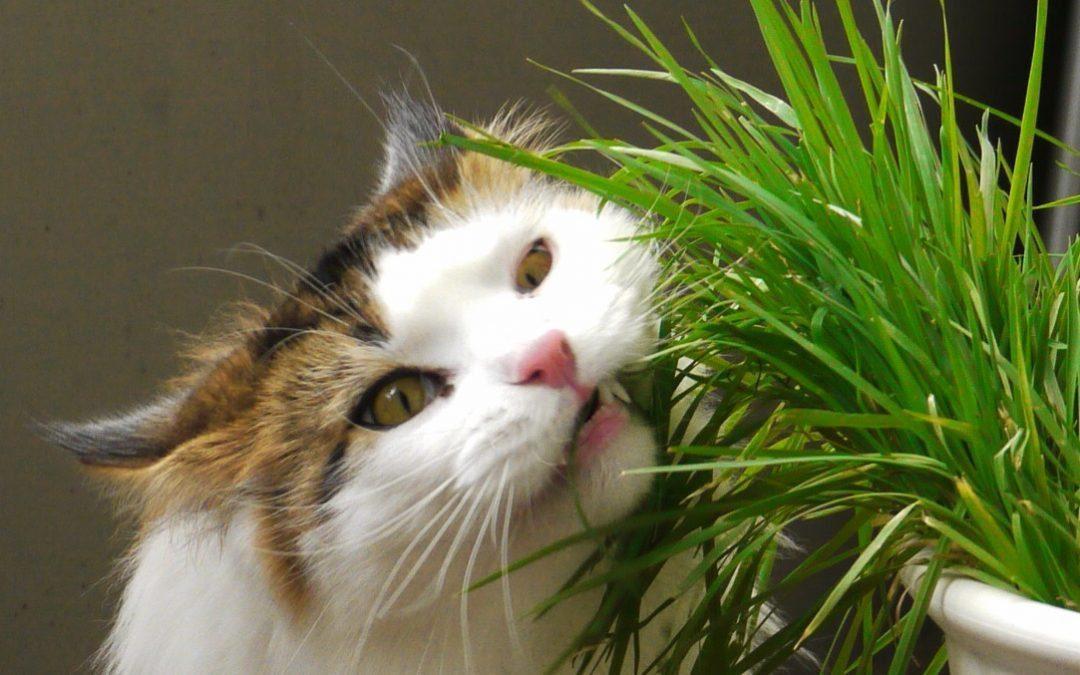 Plant Profile: Pesky Pets
