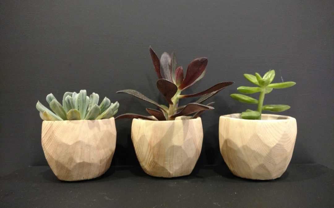 An assortment of succulents