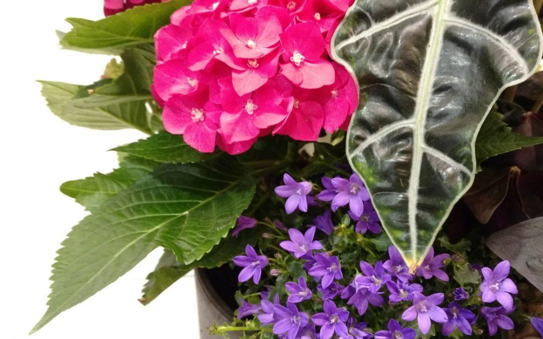 Hints of Spring at Flowers Talk Tivoli
