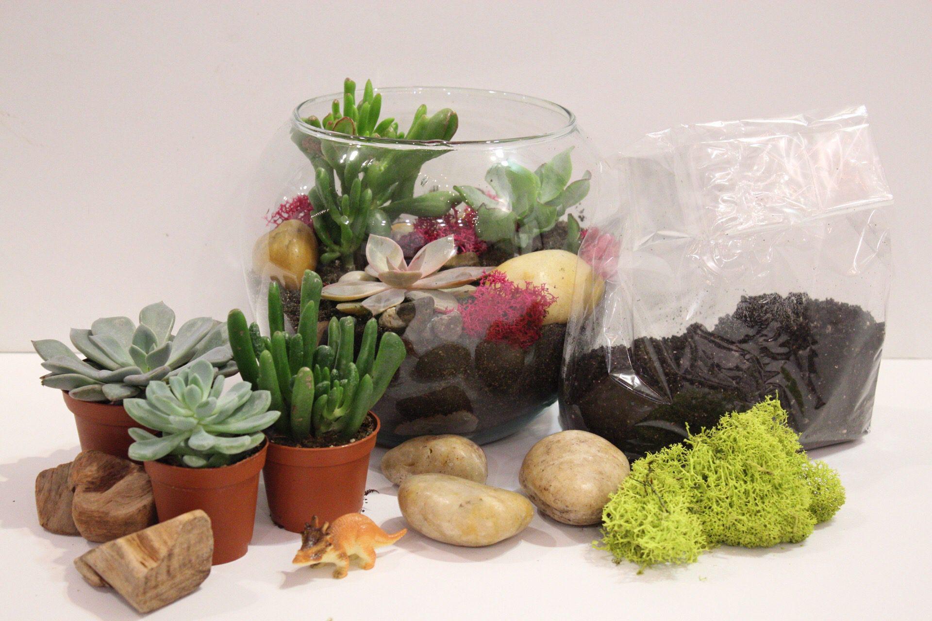 DIY Succulent Terrarium Kit