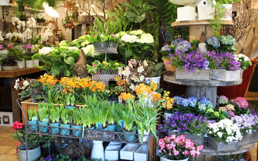 Spring Is In Our Store!