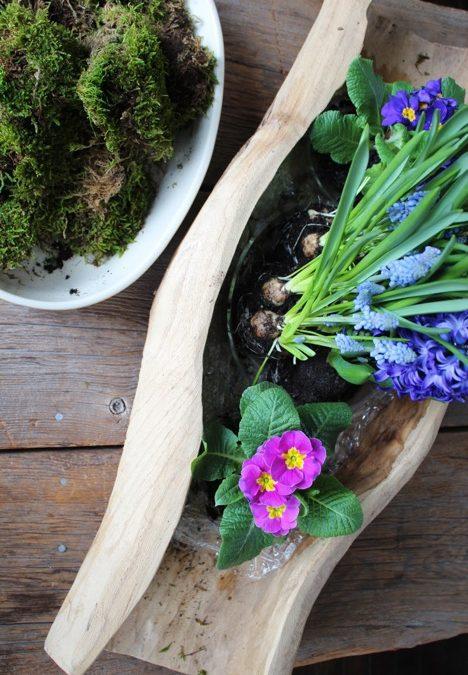 Colourful DIY Indoor Spring Bulb Planter