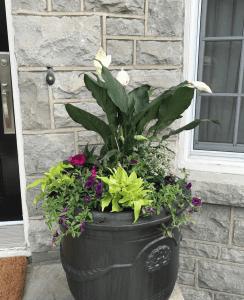 morning sun planter