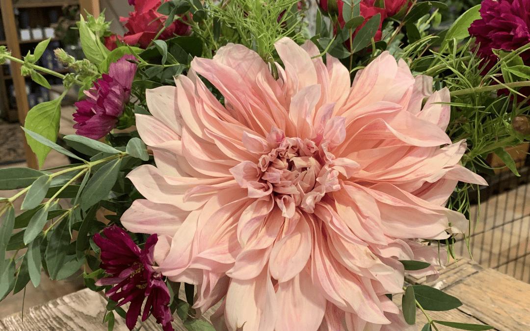 Soft pink large dhalia in a floral arrangement in a vase