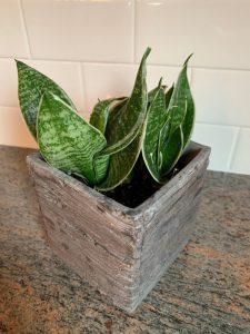 freshly watered plant