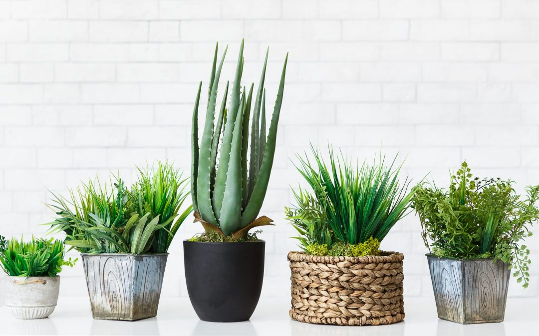 Our Top Potting Picks