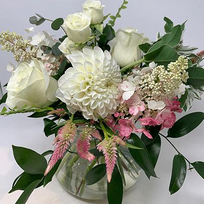 White Dahlias - Flowers Talk Tivoli