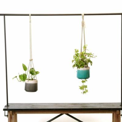 Plant Collecting: A Hobby For Home - Flowers Talk Tivoli
