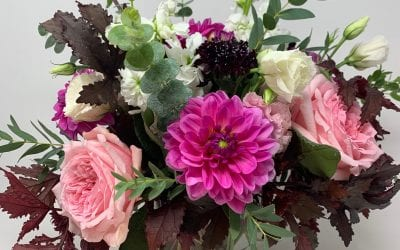 It's That Time of the Year Again – Dahlia Season is Back!