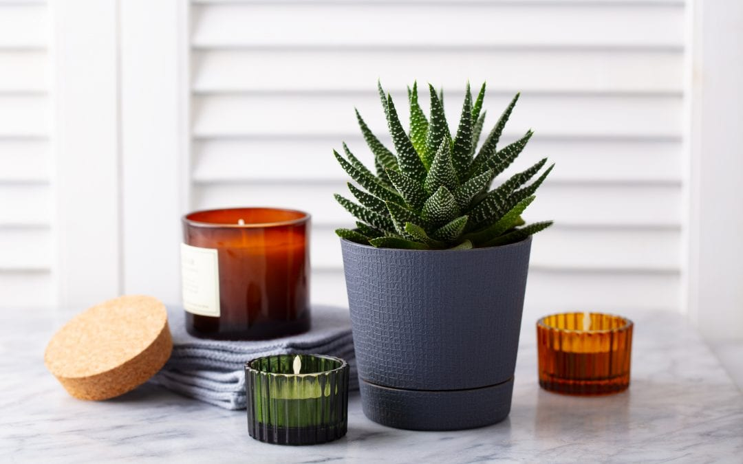 Caring for Your Succulents: A One-Stop Guide