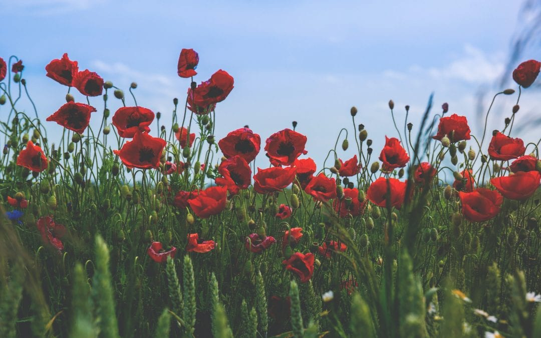 The Symbol Of The Poppy