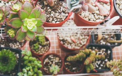 5 Houseplants That Anyone Can Take Care Of