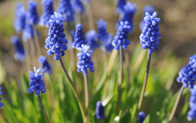 A Simple 3-Step Living Centrepiece For Spring