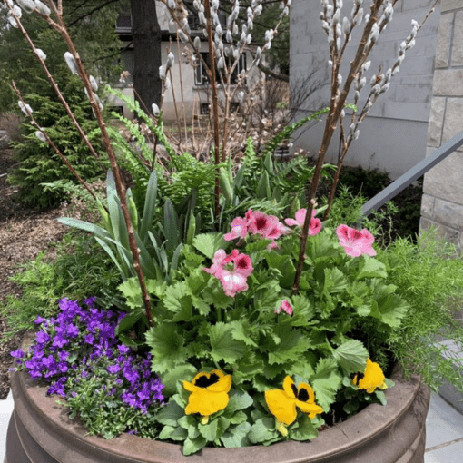 Summer plants with greenery and an array of yellow, pink and purple flowers.