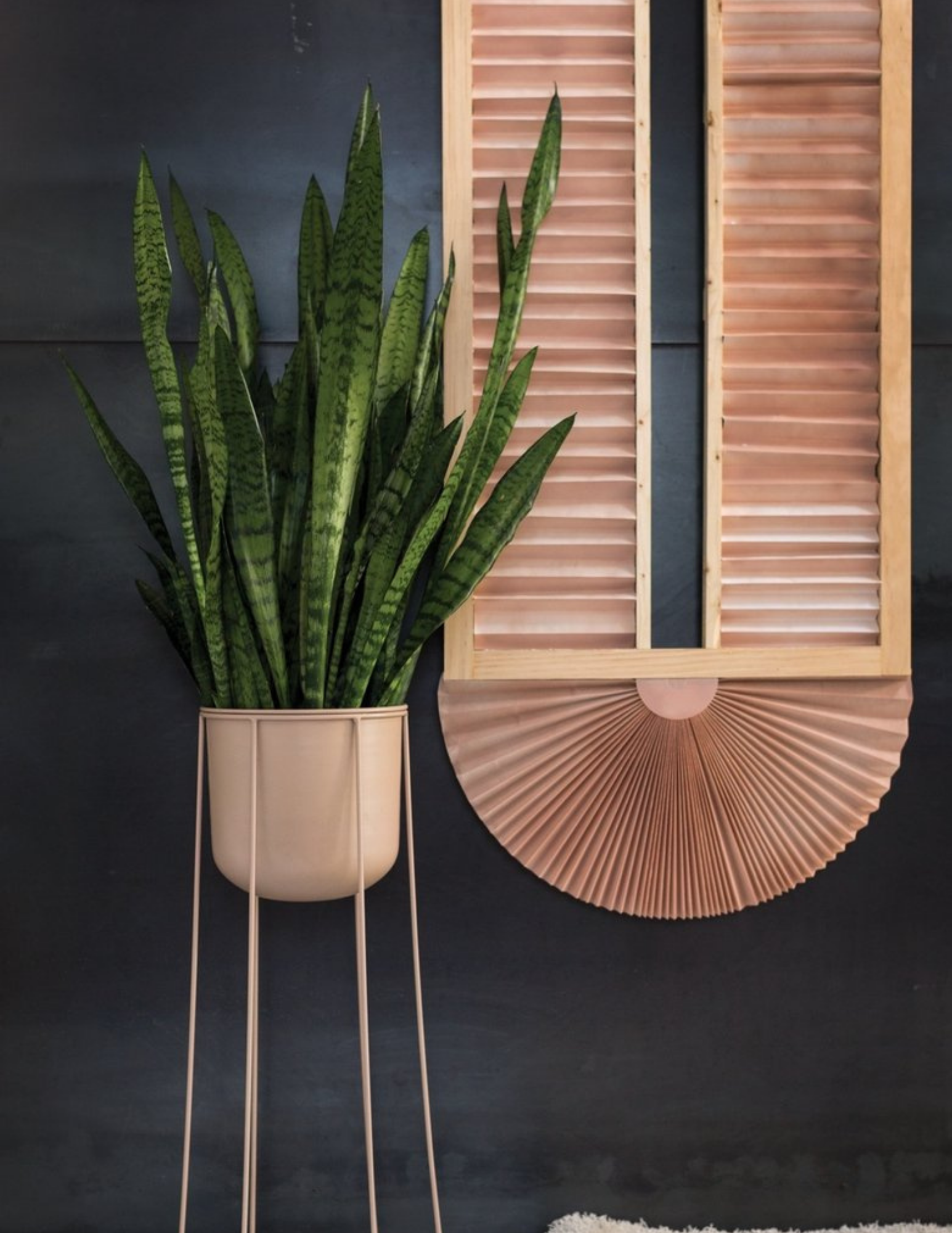 SANSEVIERIA IN PINK PLANT STAND NEXT TO A WOODEN WALL PANEL ON A BLACK BACKGROUND