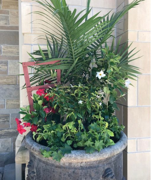 a large outdoors planter with palms and a mixture of flowers