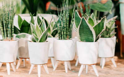 3 Ways Plants Can Help Sell Your Home Faster