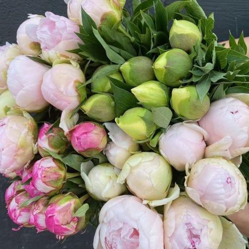 Multi-coloured peony bouquet