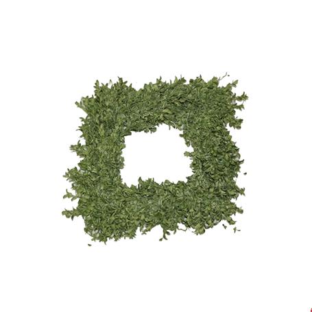 Square Oregonia Wreath