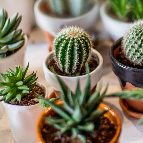 The Perfect Houseplants For Small Spaces