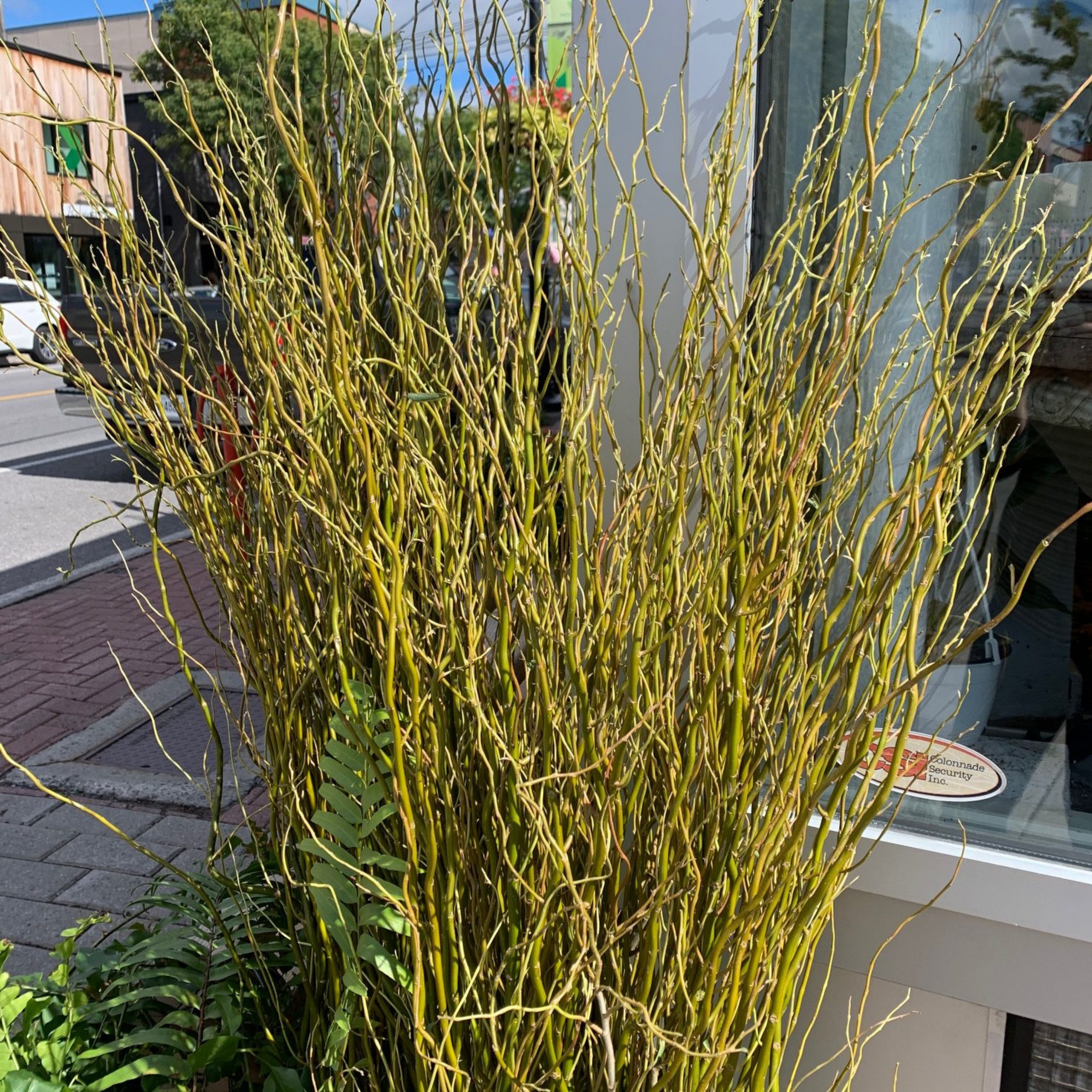 Falling For DIYs — Fall Planters, Workshops & More - Curly Willow