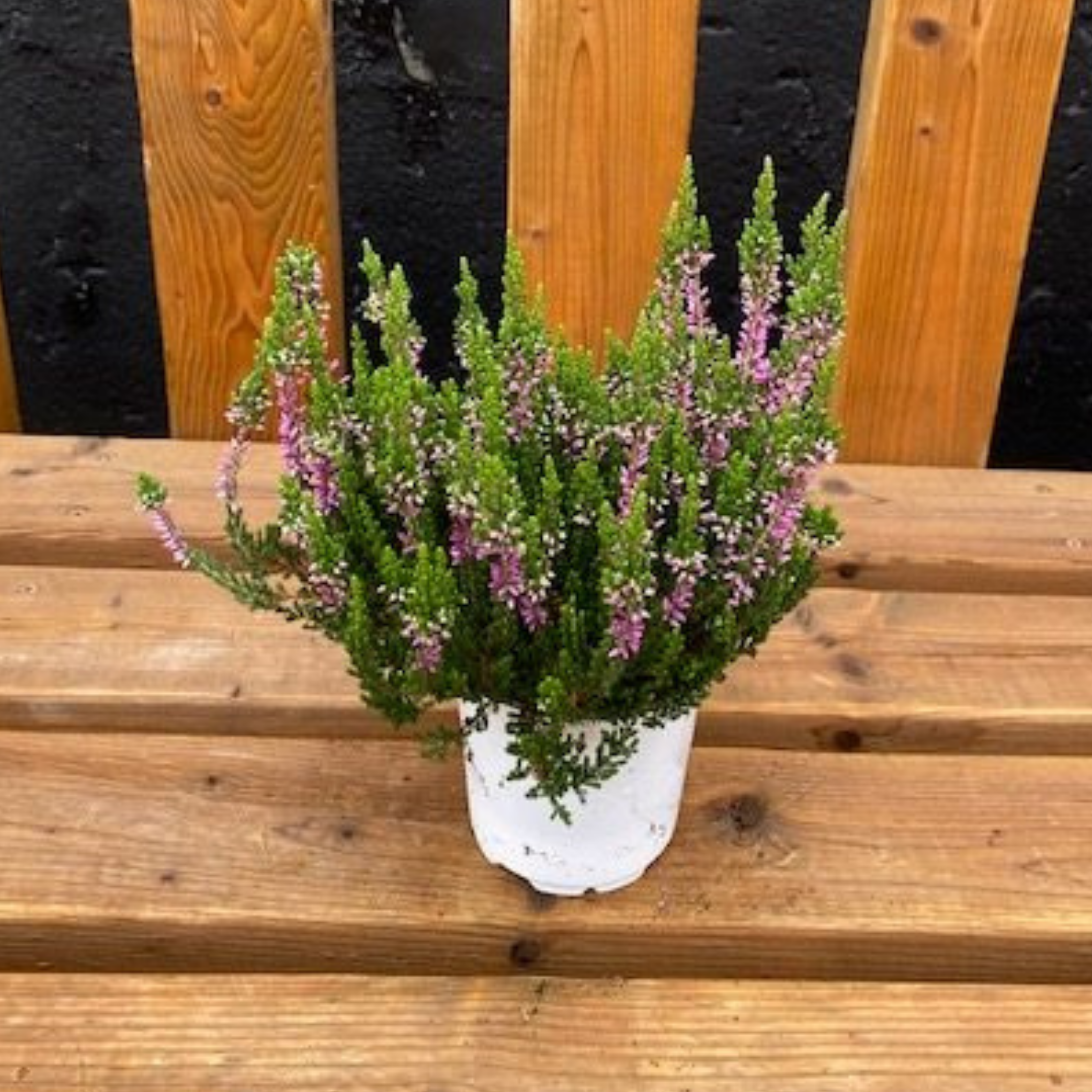 Falling For DIYs — Fall Planters, Workshops & More - Hot Pink Heather