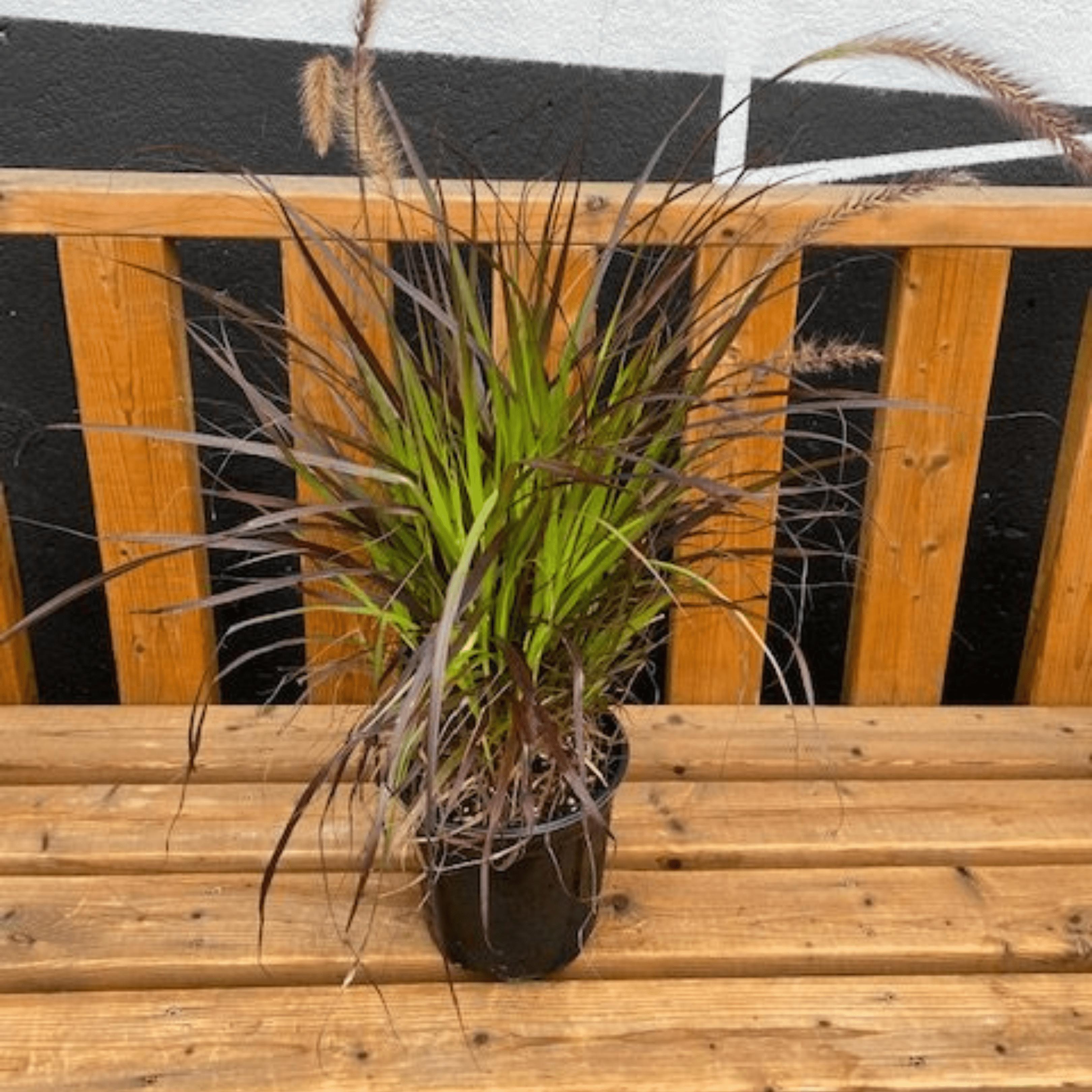 Falling For DIYs — Fall Planters, Workshops & More - Ornamental Grass